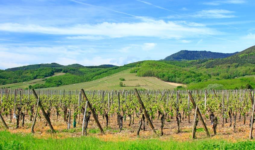 La ruta del vino de Alsacia