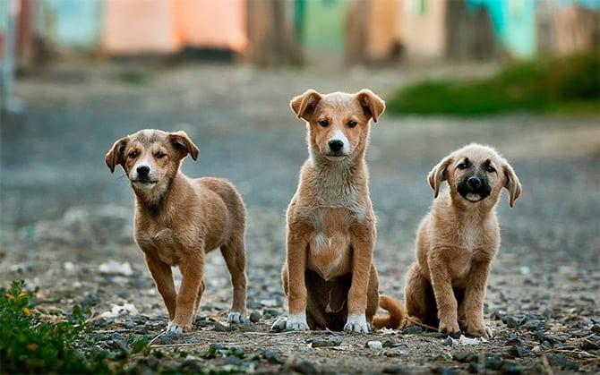 perros abandonados holanda