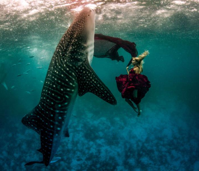 La Imagen de Shawn Heinrichs – La belleza del tiburón ballena