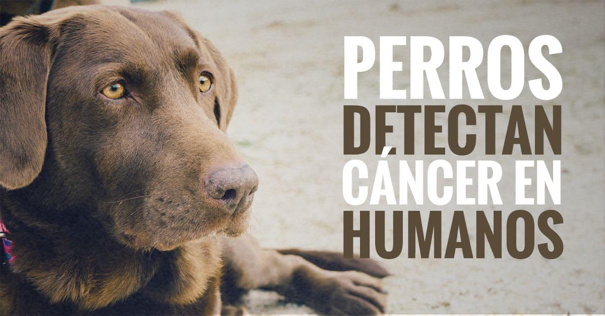 perros detectan cancer