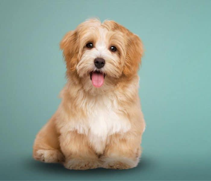 Terapia asistida con animales | Descubre cómo una mascota puede mejorar tu salud