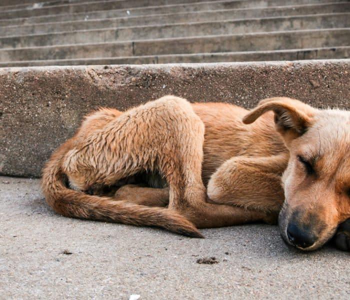 ¿Cómo ha conseguido Holanda acabar con los perros abandonados?
