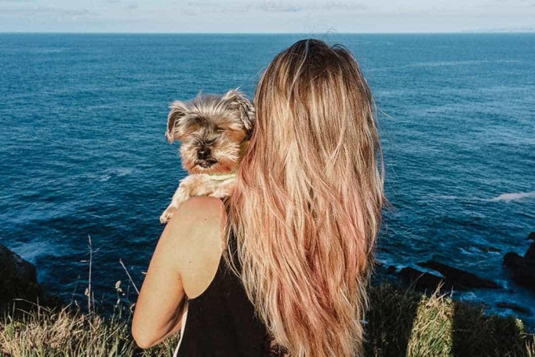 Los mejores piensos naturales holísticos para perros: Qué son y cómo elegir el mejor
