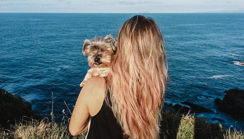 piensos naturales holísticos para perros